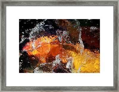 Koi Oasis Framed Print by Elizabeth Hart