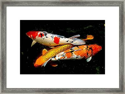 Koi Story Three E Framed Print by Randall Weidner