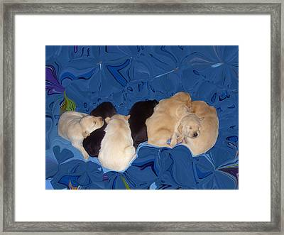 Lab Pups 1 Framed Print by Aimee L Maher Photography and Art Visit ALMGallerydotcom