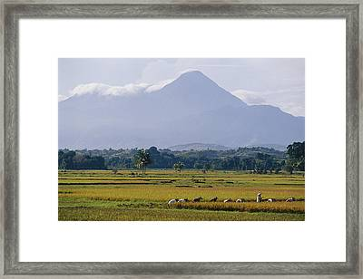 Laborers In A Rice Field Work Framed Print by Steve Raymer