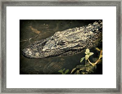 Lady Alice Queen Of The Lake Framed Print by Joan Carroll