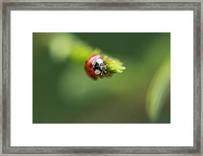 Ladybug 2 Framed Print by Pan Orsatti