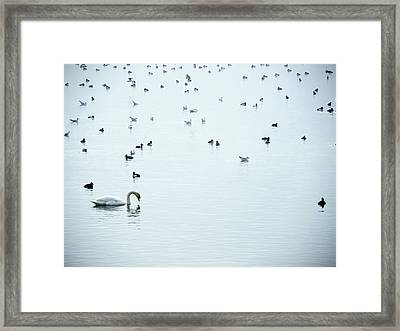 Lake Constance Framed Print by Rolfo