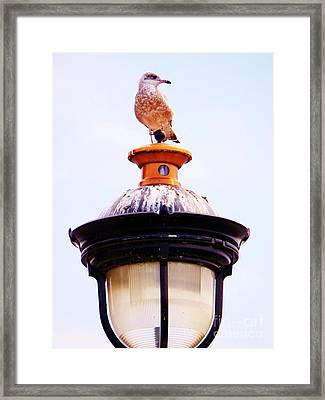 Lampost Gull   One Framed Print by Judy Via-Wolff