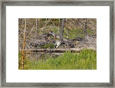 Landing Gear Down Framed Print by Charles Warren