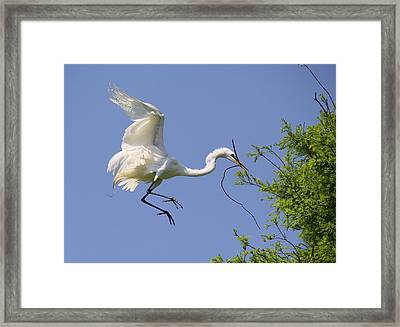 Landing Gear Down Framed Print by Paulette Thomas