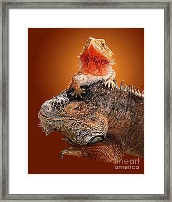 Lap Lizard Framed Print by Jim Carrell