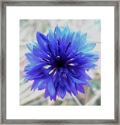 Lapis Lazuli Framed Print by Barbara St Jean