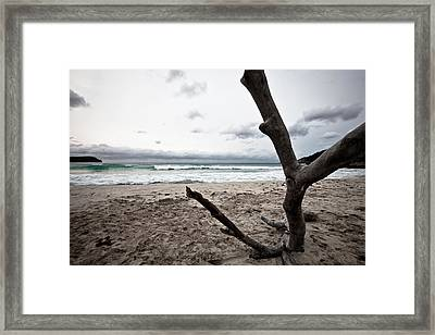 Large Piece Of Driftwood On A Beach On An Overcast Day Framed Print by Anya Brewley schultheiss