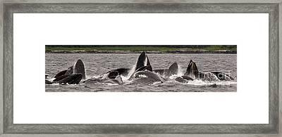 Large Pod Bubble Feeding Framed Print by Darcy Michaelchuk