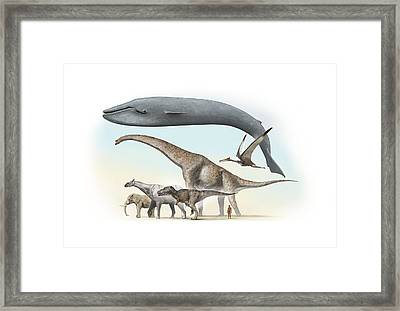 Largest Animals Size Comparison Framed Print by Jose Antonio PeÑas