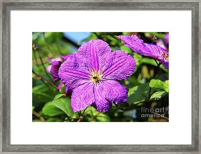 Last Summer Bloom Framed Print by Mariola Bitner