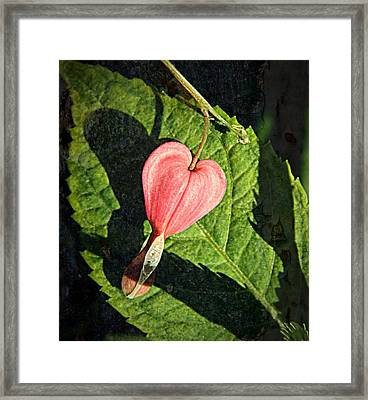 Late Afternoon  Framed Print by Chris Berry