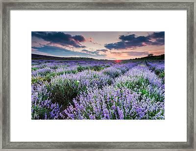 Lavender Sea Framed Print by Evgeni Dinev