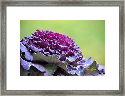 Layers Of Wet Beauty Framed Print by Sandi OReilly