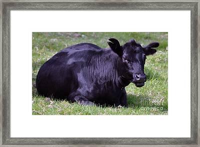 Lazy Cow Framed Print by Joanne Kocwin