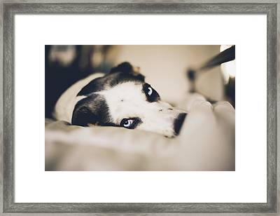 Lazy Dog Framed Print by Lisa MacIntosh