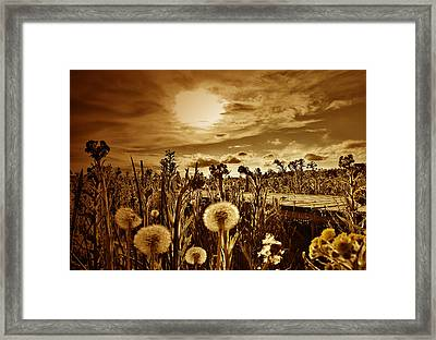 Lazy Grasshopper  Framed Print by JC Photography and Art