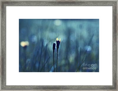 Le Centre De L Attention - Blue S0203d Framed Print by Variance Collections