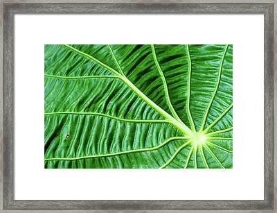 Leaf Framed Print by by Jonathan Fife