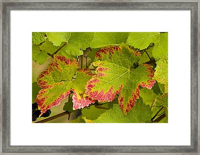 Leaf Design Framed Print by Jean Noren