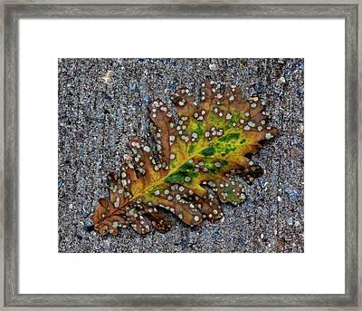 Leaf On The Sidewalk Framed Print by Robert Ullmann