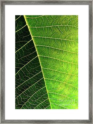 Leaf Texture Framed Print by Carlos Caetano