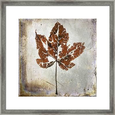 Leaf  With Textured Effect Framed Print by Bernard Jaubert