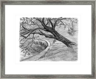 Leaning Tree Framed Print by Adam Long