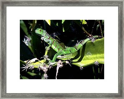 Leapin Lizards Framed Print by Karen Wiles