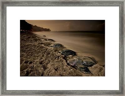 Leatherback Turtles Nesting On Grande Framed Print by Brian J. Skerry