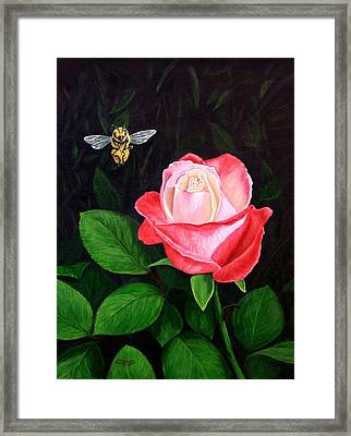 Leave My Rose Alone Framed Print by Jim Ziemer