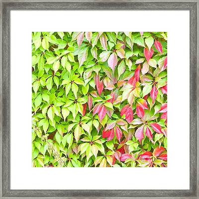 Leaves Background Framed Print by Tom Gowanlock