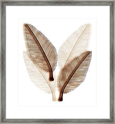 Leaves Framed Print by Frank Tschakert