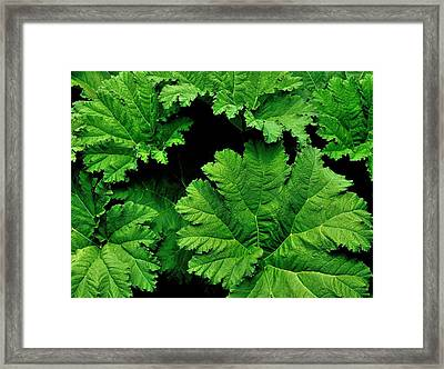 Leaves Framed Print by Kathy King