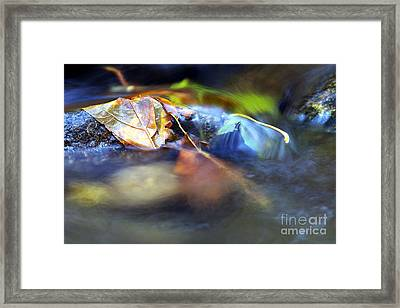 Leaves On Rock In Stream Framed Print by Sharon Talson