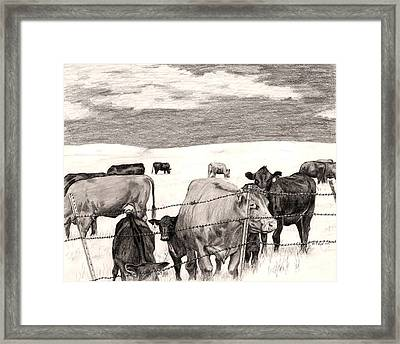 Leery Cows Framed Print by Jason Thrun