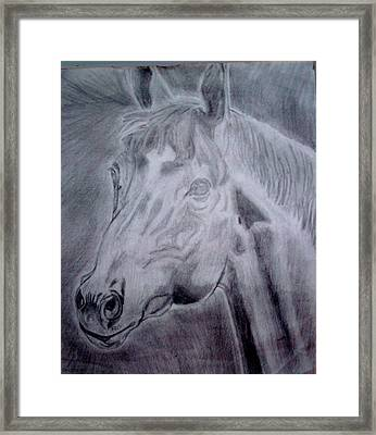 Legendary Secretariat Framed Print by De Beall