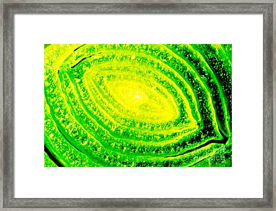 Lemon And Lime Study Of Vegetable Close Up Framed Print by Andy Smy