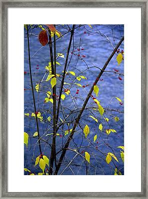 Lemonettes Framed Print by Ed Smith