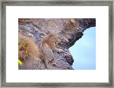Leopard Framed Print by Arno Pietersen