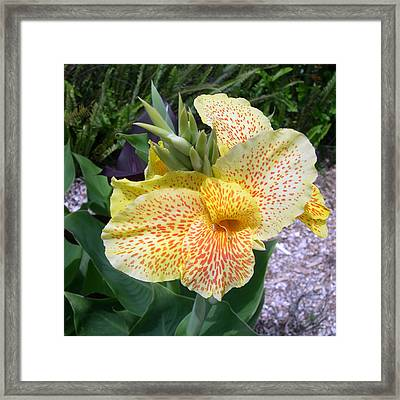 Leopard Flower Framed Print by Claude McCoy