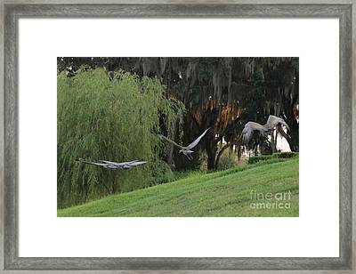 Lesson A Success Framed Print by Carol Groenen