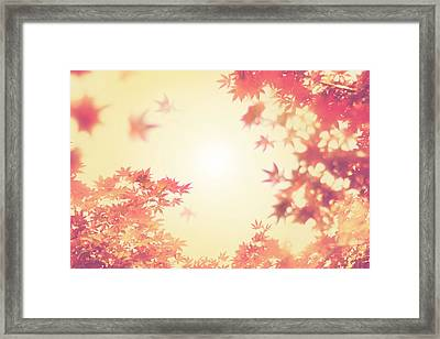 Let It Fall Framed Print by Amy Tyler