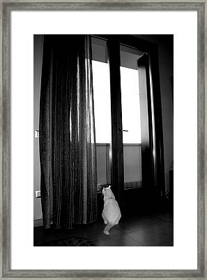 Let Me Go Framed Print by Donato Iannuzzi