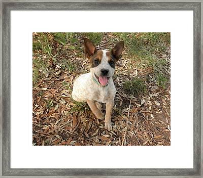 Let's Play 2 Framed Print by Camille Reichardt