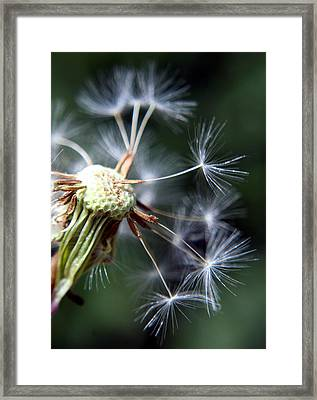 Letting Go  Framed Print by Heather Applegate