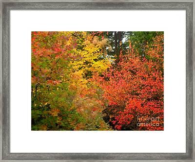 Li12.20 Framed Print by Shasta Eone