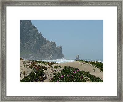 Life - Is Everywhere Framed Print by From Gods Porch Photography
