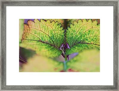 Life 2 Framed Print by Dawn Nicoli